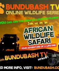 BunduBash Wildlife TV