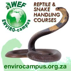 Reptile & Snake Handling Courses