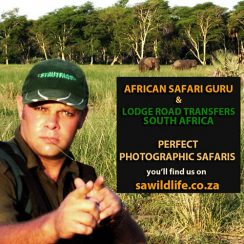 SAFARI GURU & ROAD TRANSFERS