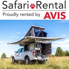 Avis Safari Rental