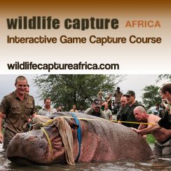 Wildlife Capture Africa