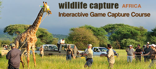 Game Capture Course